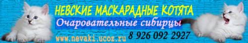 Сибирские невские маскарадные кошки